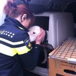 Oormijt Hond Behandelen
